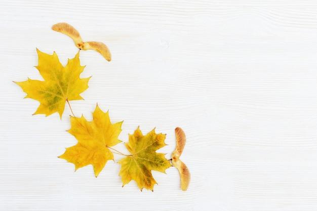 Modello delle foglie e dei semi di acero su fondo di legno bianco