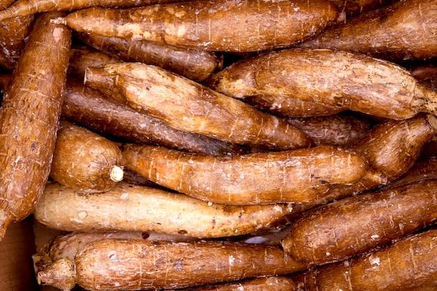 Modello di cibo vegetale rizomi di manioca yucca