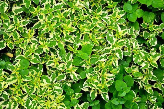 Modello di foglia piccola verde e bianco nella natura