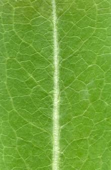 Modello di struttura fogliare, trama di foglie verdi