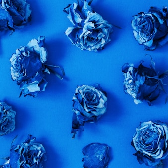 Modello fatto di fiori di rosa essiccati. colore dell'anno 2020 blu classico.