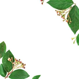 Modello verde di arte moderna del libro bianco su fondo bianco. sfondo floreale