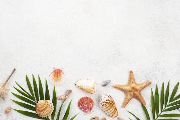 Molluschi e foglie di copia-spazio