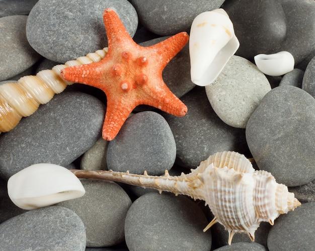 Molluschi marini e la stella