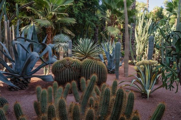 Molte diverse varietà di cactus nei giardini di majorelle.