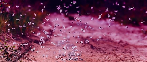 Molte farfalle bianche del cavolo volano al giorno di estate soleggiato, foto viola moderna moderna