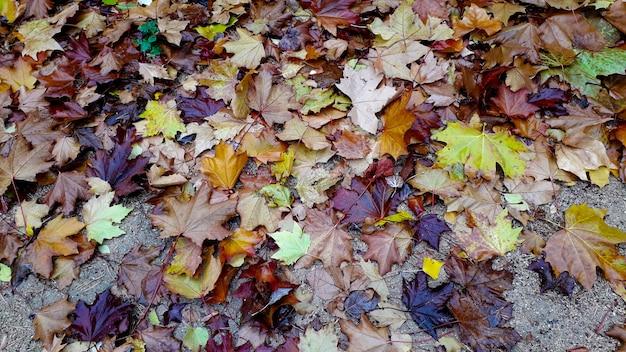 Molte foglie secche e diversi colori sul terreno come sfondo