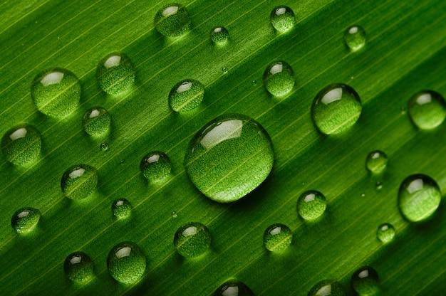 Molte gocce d'acqua cadono su foglie di banano