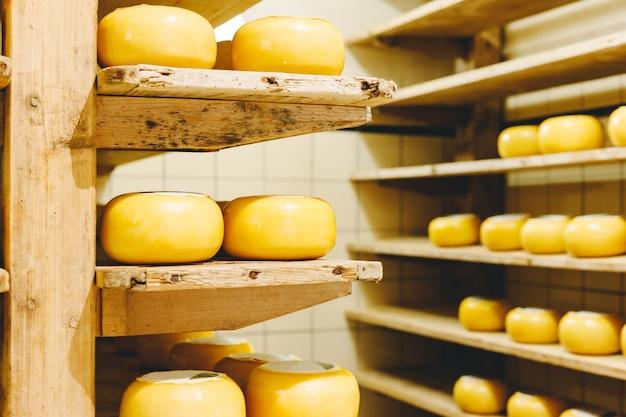 Molte teste di formaggio olandese giallo in cera maturano sugli scaffali di legno in caseificio