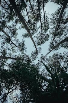 Molti alberi