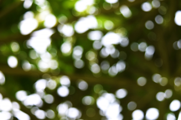 Molti bokeh luce per sfondo verde