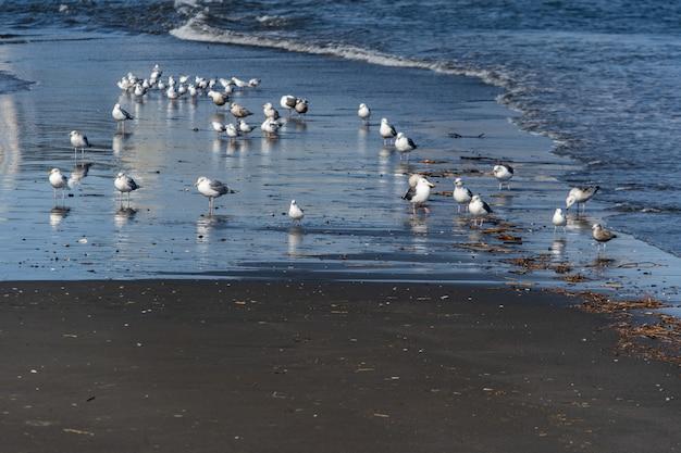 Molti gabbiano sull'isola di enoshima della spiaggia