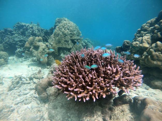 Molti pesci con barriera corallina marina e coralli duri