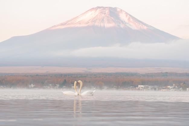 Molto bella coppia bianca swan sentirsi romantici e ama il lago yamanaka con il monte. backgroun di fuji