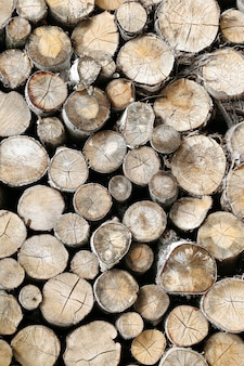 Molto legname