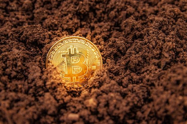 Moneta bitcoin nel terreno, tesoro. primo piano di una moneta d'oro bitcoin