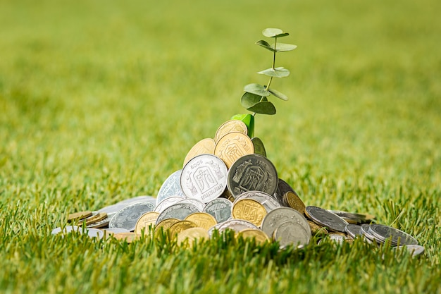 Monete sull'erba
