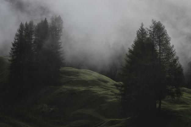 Montagna con pini ricoperti di nebbie