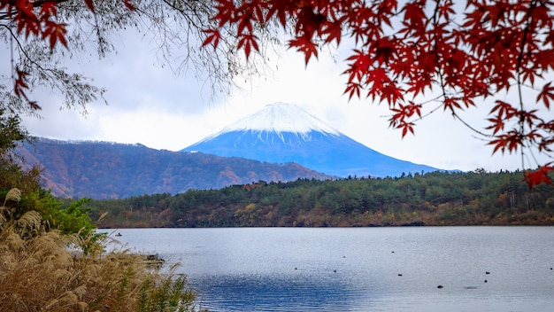 Montagna fuji a lake view kawaguchiko japn in autumn season.