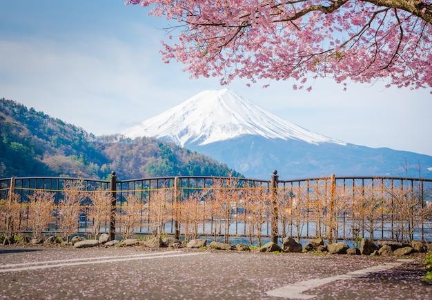 Montagna fuji in primavera, cherry blossom sakura
