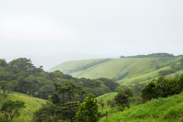 Montagna verde pacifica in costa rica tropicale