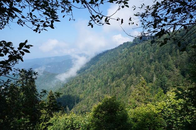 Montagne coperte di conifere e latifoglie e nuvole.
