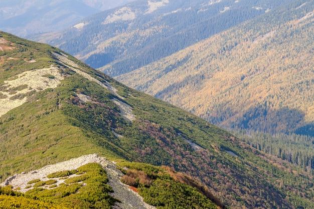 Montagne di estate con il paesaggio dell'erba verde.