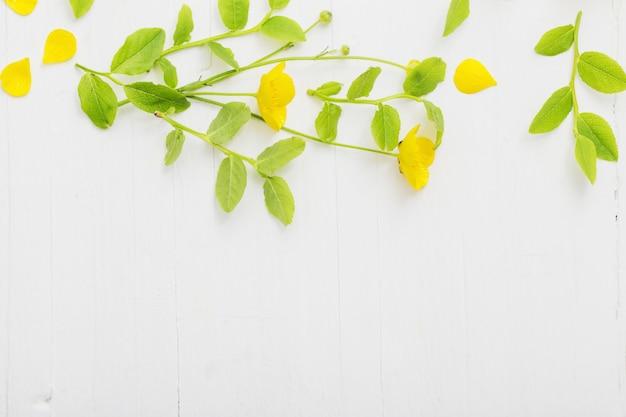 Motivo floreale con ranuncoli gialli su un muro bianco