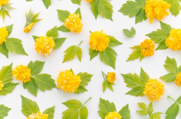 Motivo floreale decorativo