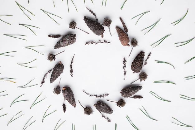 Motivo floreale fatto da coni di conifere e aghi su uno sfondo bianco