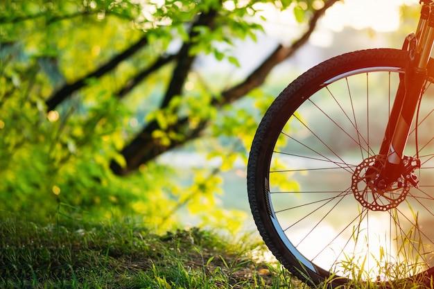 Mountain bike nella foresta al tramonto.
