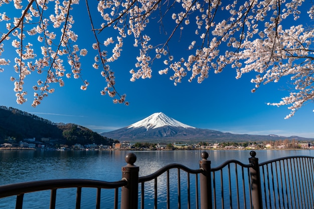 Mt. fuji in primavera con i fiori di ciliegio a kawaguchiko fujiyoshida, in giappone.