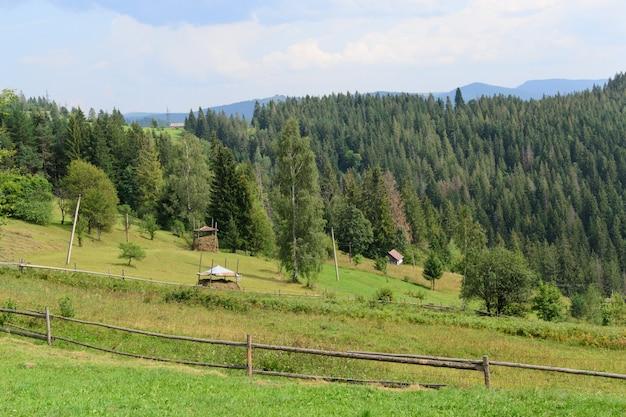 Mucchi di fieno del prato e della foresta delle alte montagne del paesaggio