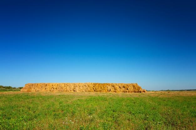 Mucchi di fieno sul campo di grano sotto il bellissimo cielo nuvoloso blu