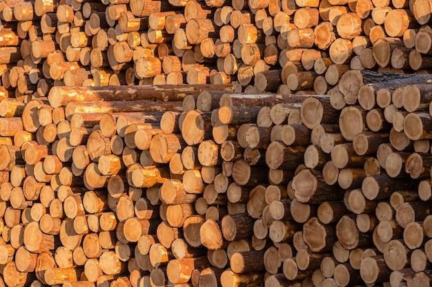 Mucchi di tronchi di pino e larice preparati per l'esportazione. il concetto di abbattimento e distruzione delle riserve forestali mondiali.