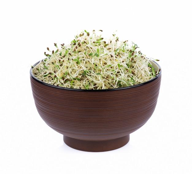 Mucchio dei germogli di erba medica su fondo bianco