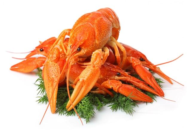 Mucchio di aragoste rosse con contorno di aneto isolato su bianco