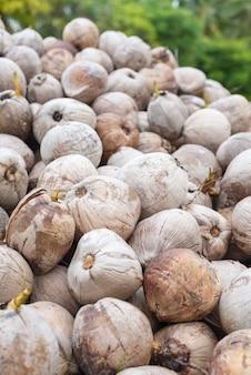 Mucchio di cocco maturo, frutti tropicali