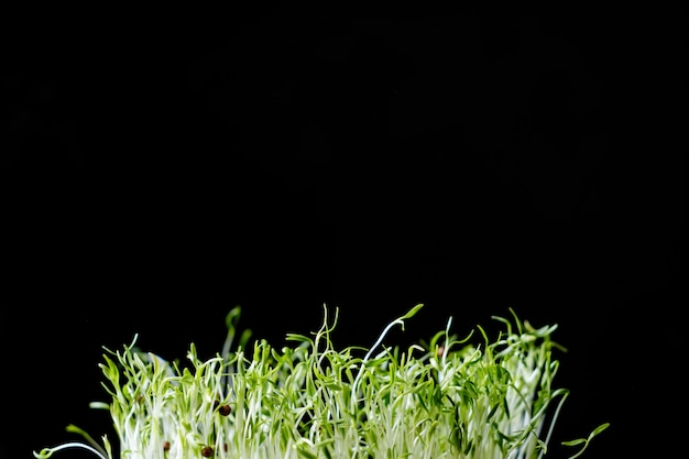 Mucchio di giovani germogli di semi su uno sfondo nero