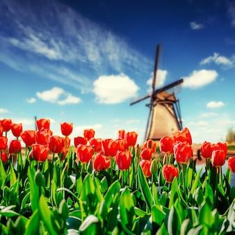 Mulini a vento olandesi tradizionali dal canale a rotterdam.