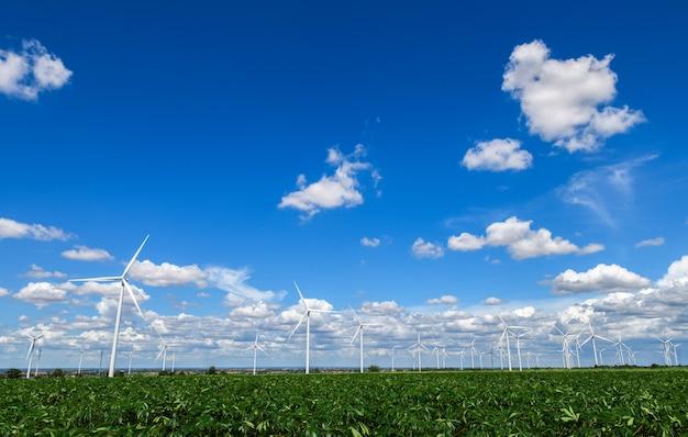 Mulini a vento per produzione di energia elettrica nel giacimento della manioca su cielo blu