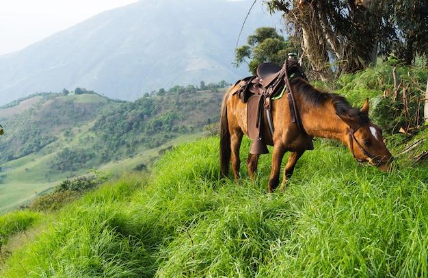 Mulo con sella al pascolo tra le montagne della colombia concetto di animali domestici.