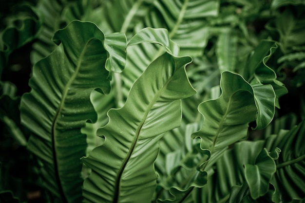 Muro di foglie verdi, parete foglia natura,