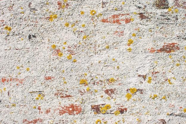 Muro di mattoni bianchi, compreso l'imbiancatura e lo sbiadimento di alcuni mattoni, con elementi di muschio, in costruzione per lo sfondo.