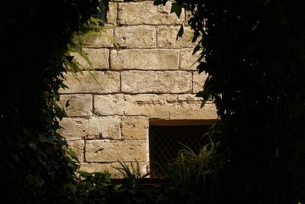 Muro di pietra incorniciato attraverso il fogliame di alcuni arbusti scuri