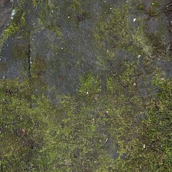 Muschio della foresta del primo piano sulla scogliera