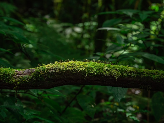Muschio e felce nella foresta pluviale