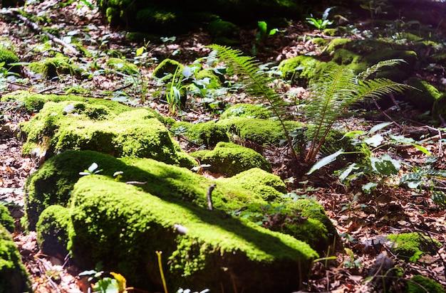 Muschio e recinzione nel bosco