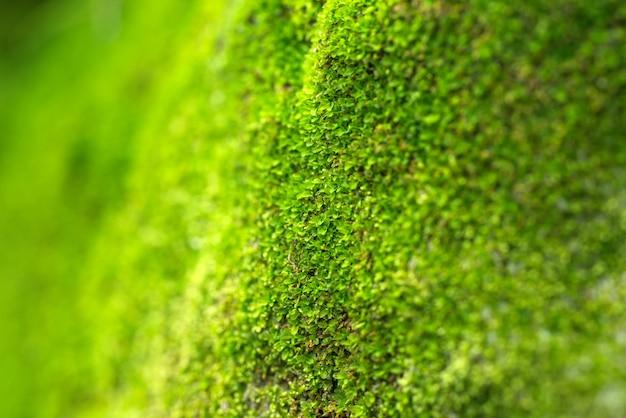 Muschio su uno sfondo di albero