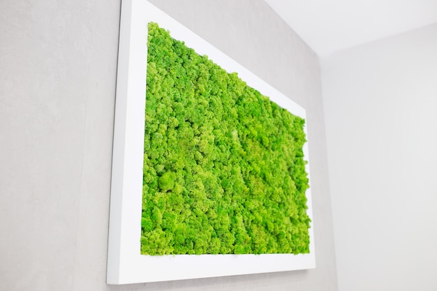 Muschio verde sul muro sotto forma di un'immagine. bella cornice bianca per una foto. ecologia.